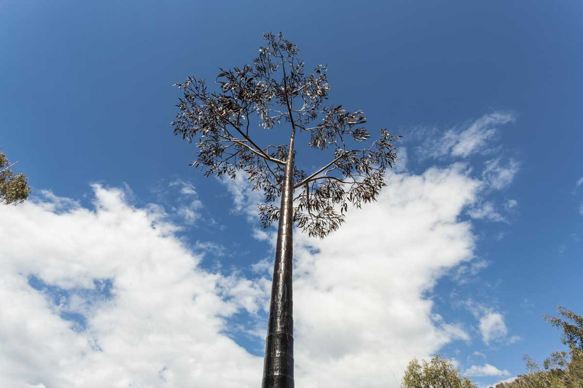 Nillumbik Shire, The Blacksmiths Tree - Strathewen