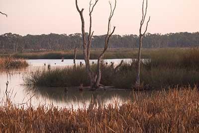 wetlands in Kerang