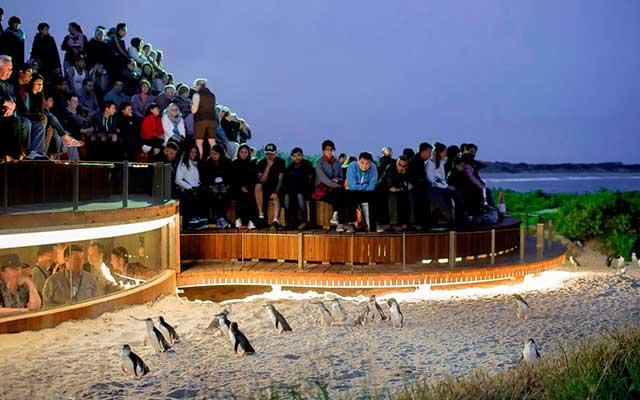 Philip Island Nature Park