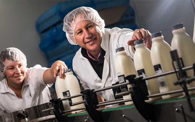Milk production at Schulz Organic Dairy